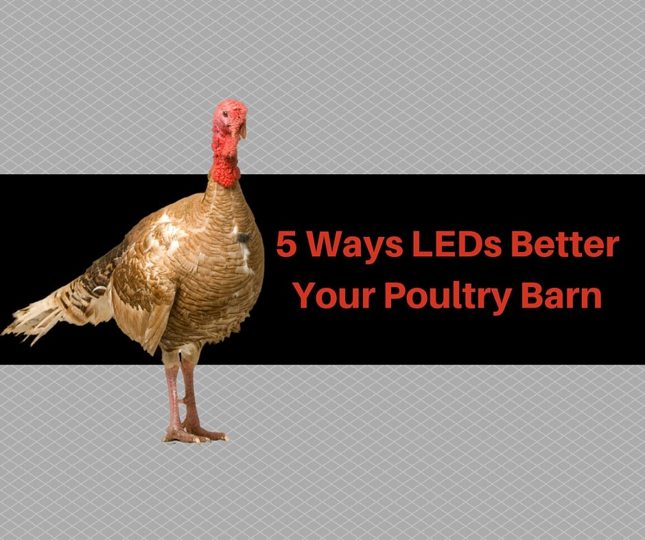 5 ways leds better your poultry barn sitler s led supplies