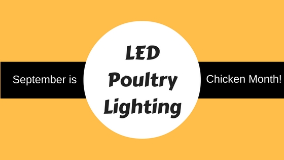 LED poultry lighting  sc 1 st  Sitleru0027s LED Supplies & September is Chicken Month: Learn about LED Poultry Lighting ... azcodes.com